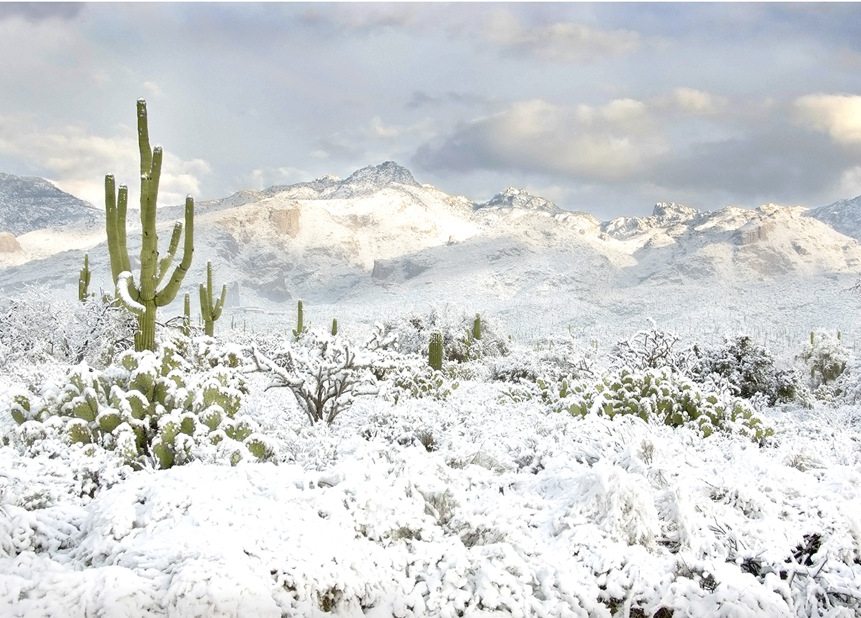 Snow in the desert in Sabino Canyon Park. Green saguaro and other cacti covered in snow along with the Catalina mountains
