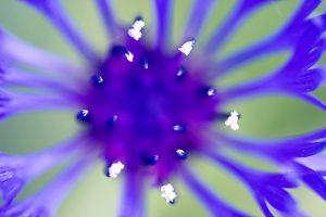 _DSC9751bluer-c1.jpg